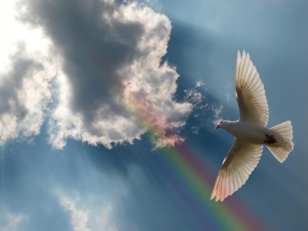 Перо голубя стоковые фото - 1,302 перо голубя стоковые изображения