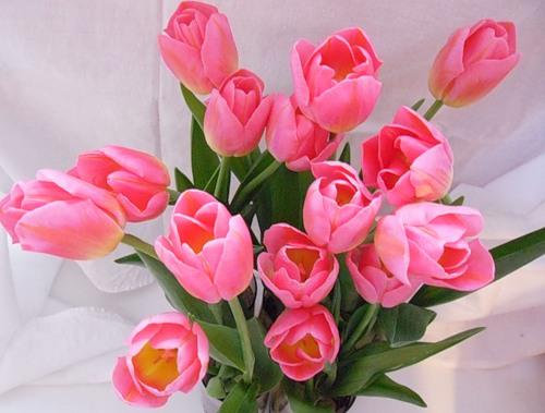 картинки розовых: