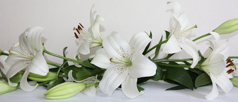 Открытка с днём рождения цветы лилии 76